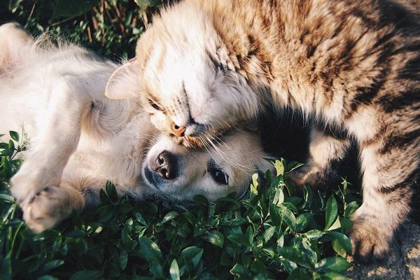 Assicurazione online cane e gatto, quanto vale il mercato delle polizze a quattro zampe