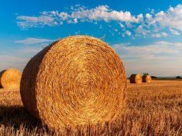 Filiera alimentare made in Italy, remunerazione da fame per il prodotto agricolo