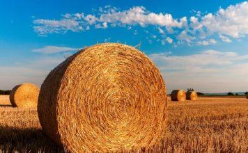 Voucher, addio al lavoro stagionale di studenti e pensionati in agricoltura