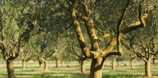 Agroalimentare Dop e Igp: produttori in forte aumento nel Mezzogiorno