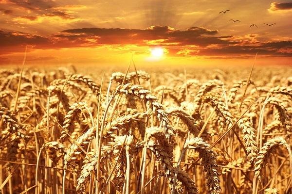 Obbligo sistema di etichettatura per grano, pasta e riso: partono 2 anni di sperimentazione