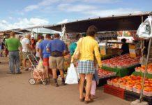 Fare la spesa, costo sacchetti bio fino a 24 euro annui a famiglia